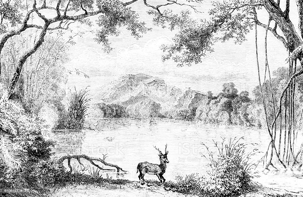 Deer by a lake Hand drawn illustration stock photo