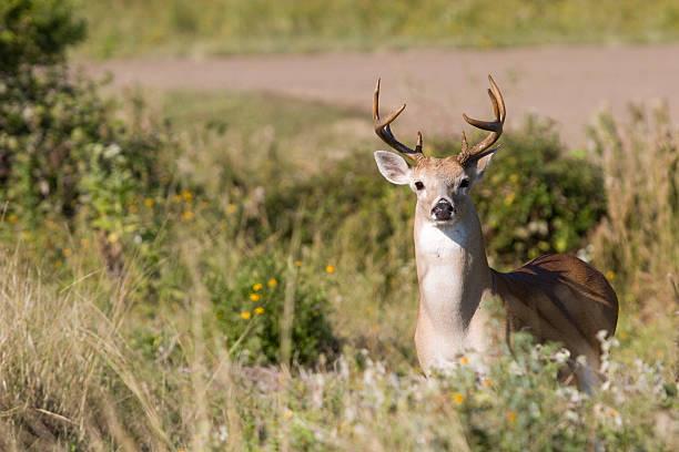 Deer by road stock photo