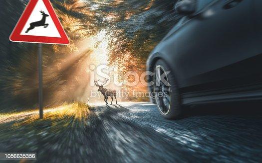 istock deer crosses a country road 1056635356
