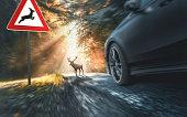 deer crosses a country road