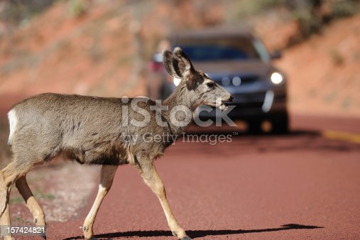 A deer crossing the road in front of a moving car. Selective focus on the deer. 200mm 2.0 + Nikon