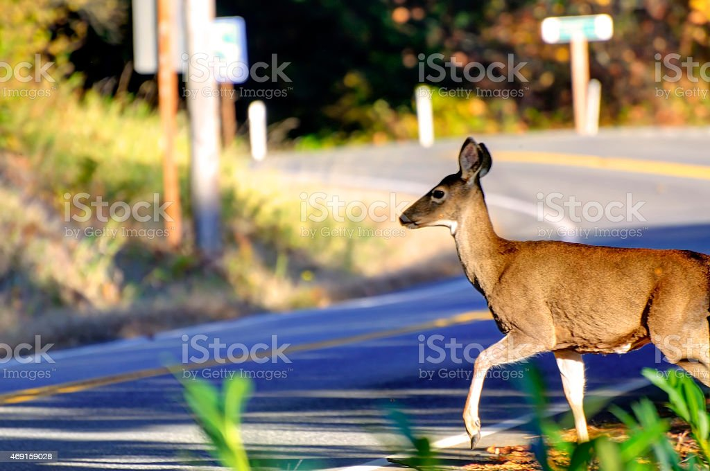 Deer Crossing Road stock photo