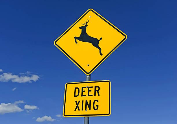 Sinal de cruzamento de cervos na estrada - foto de acervo