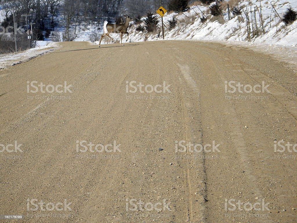 Deer - Curve Ahead royalty-free stock photo