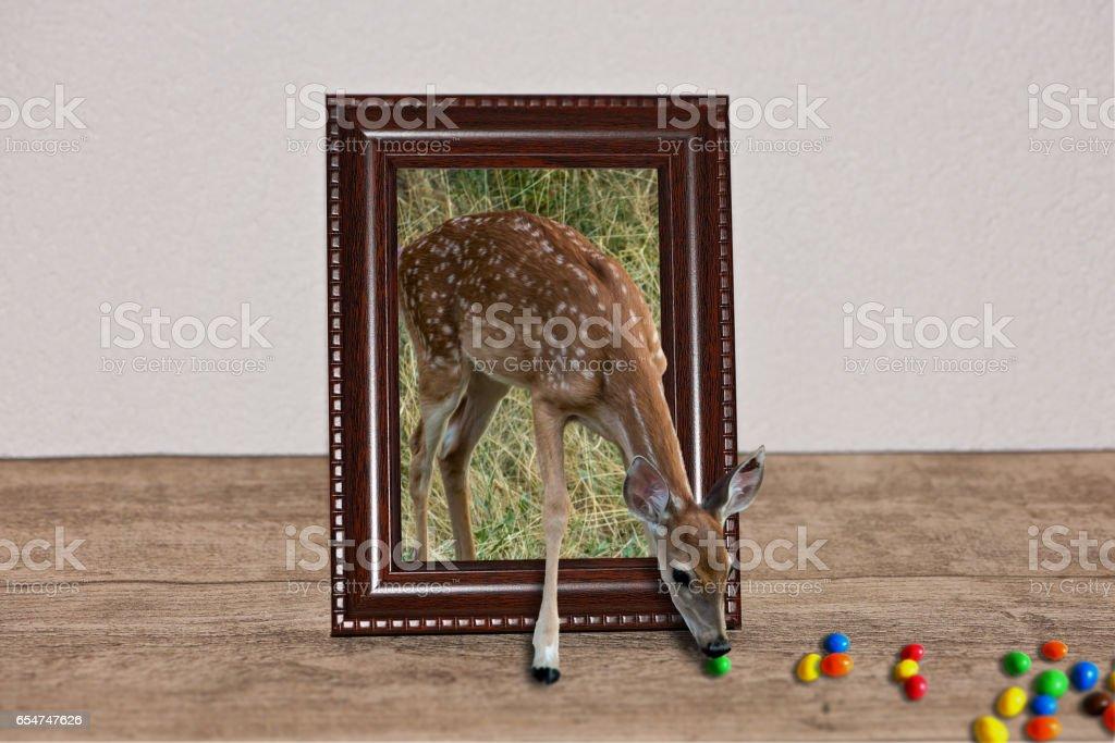 Deer Escape stock photo
