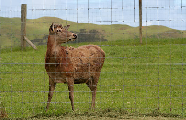 Deer Farm stock photo