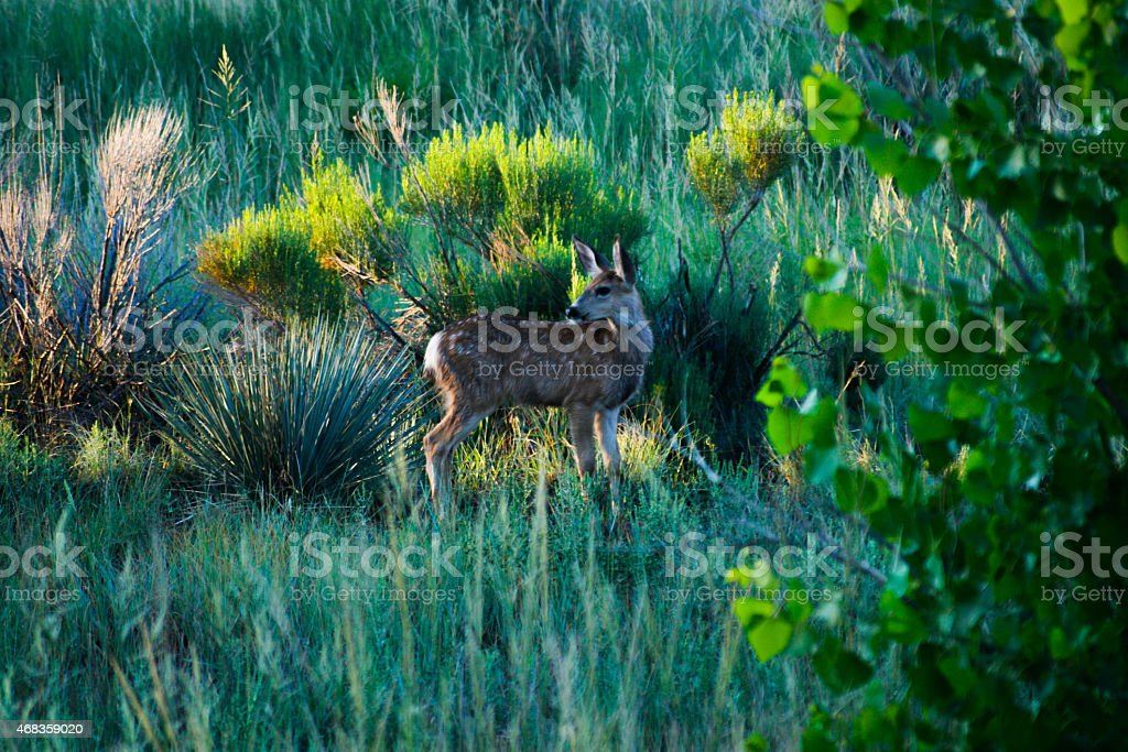 Deer Fawn royalty-free stock photo