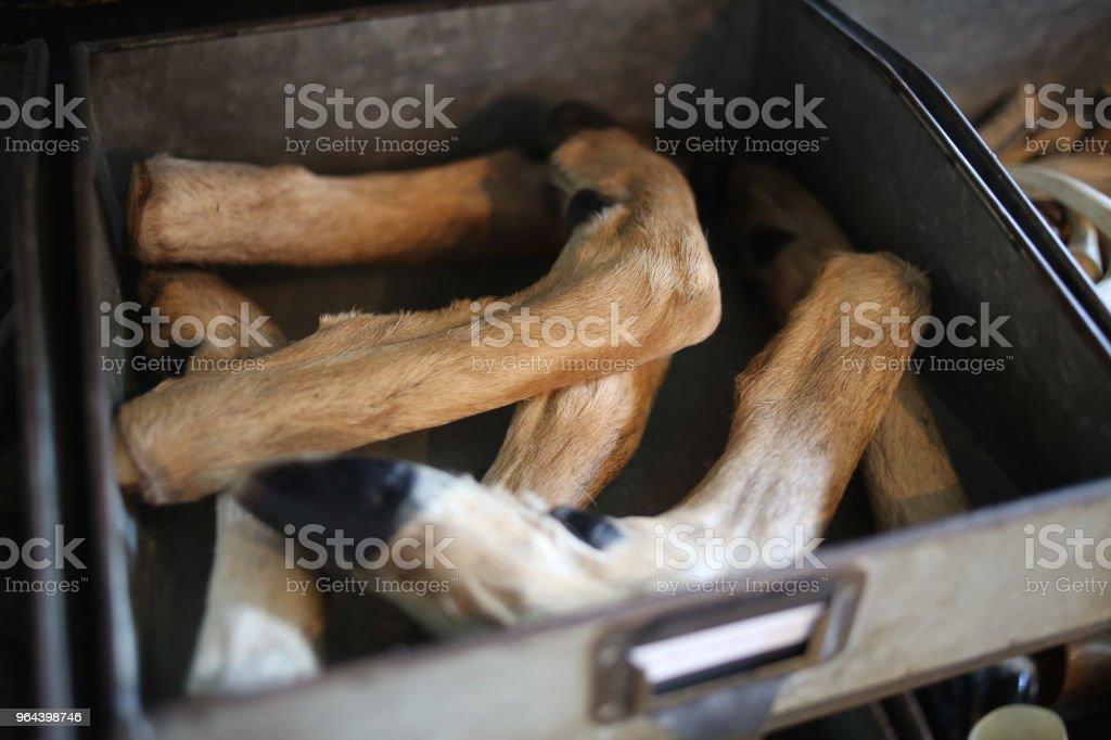 Veado do pé pernas taxidermia numa caixa de madeira - Foto de stock de Animal royalty-free