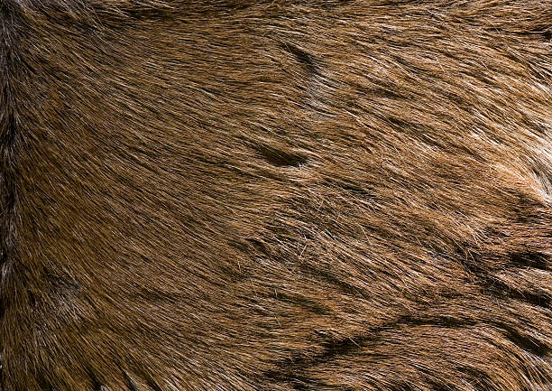 deer fur texture Close-up on deer fur for using as a cool background bristle animal part stock pictures, royalty-free photos & images