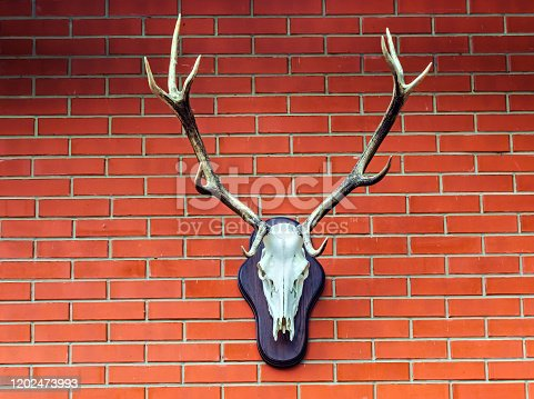 Deer head in house brick wall background. decor hunting trophy.