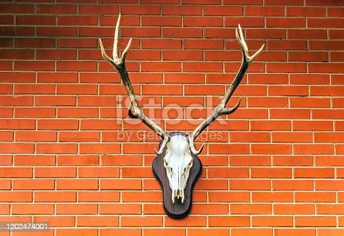Deer head hunting trophy in brick wall background.