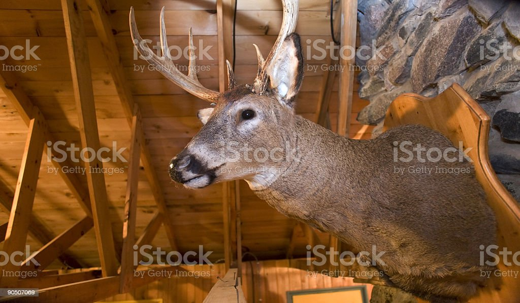 Deer Head Mounted on Wall stock photo