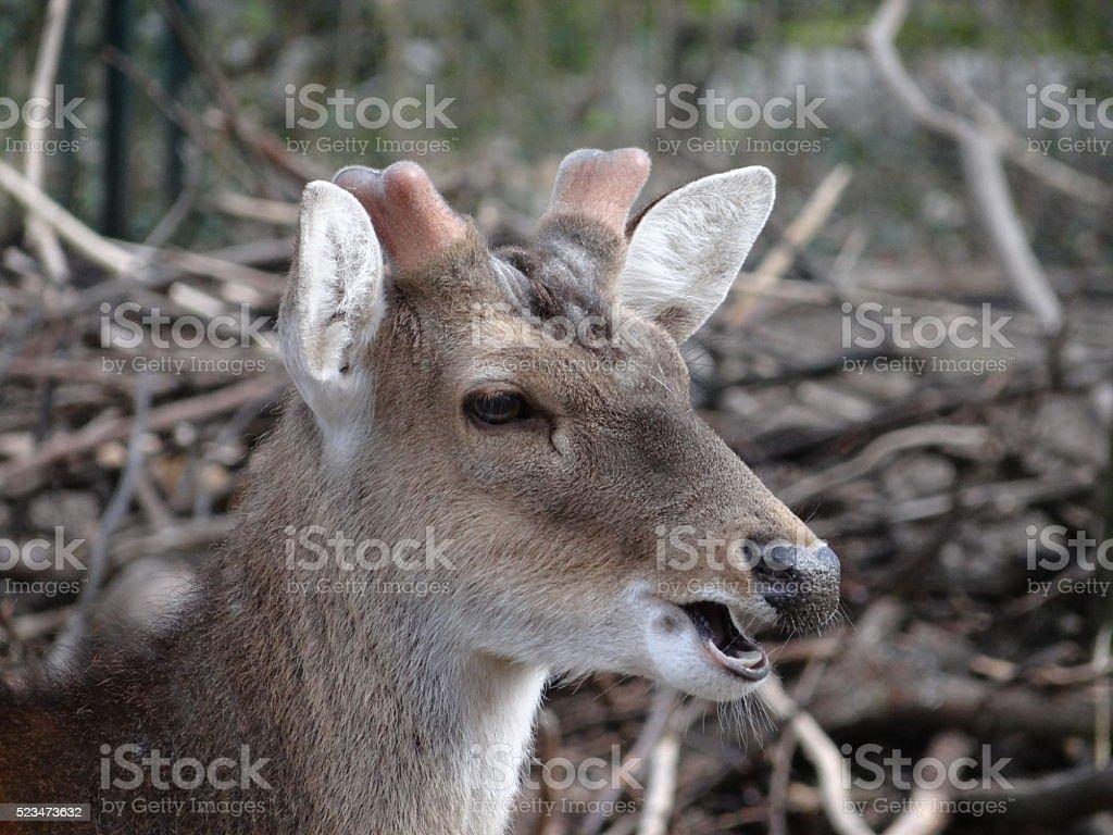 Deer head stock photo