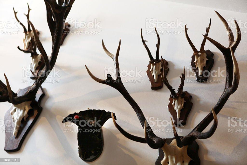 Ciervo Trofeo De Colección Stock Foto e Imagen de Stock 468842168 ...