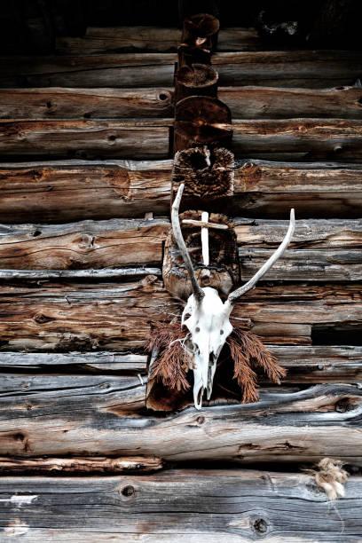 Hirsch Kopf Trophäe mit einem hölzernen Kreuz auf einem stabilen – Foto
