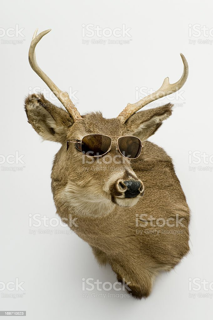 Deer Head with Sunglasses stock photo