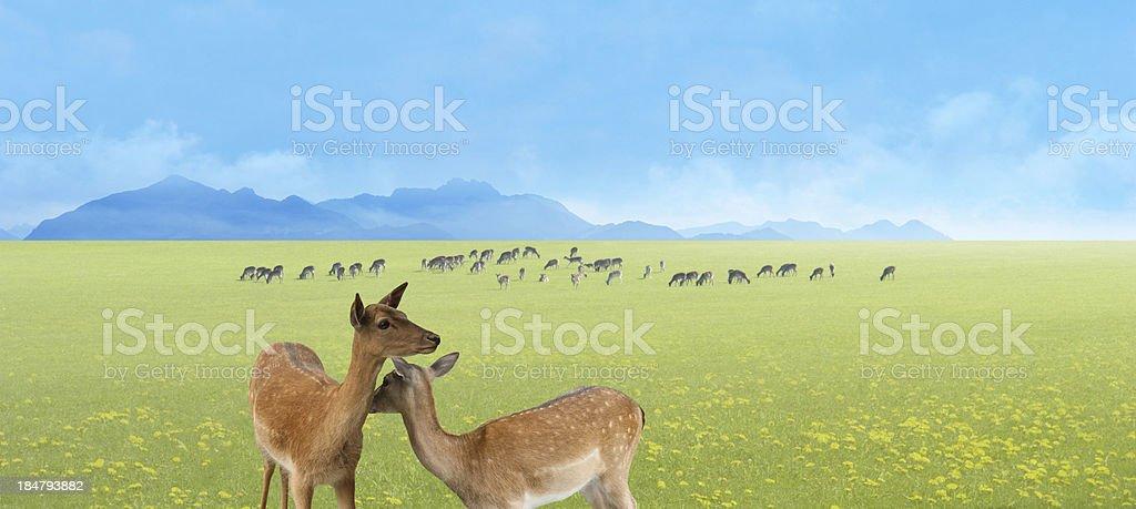 deer herd landscape royalty-free stock photo