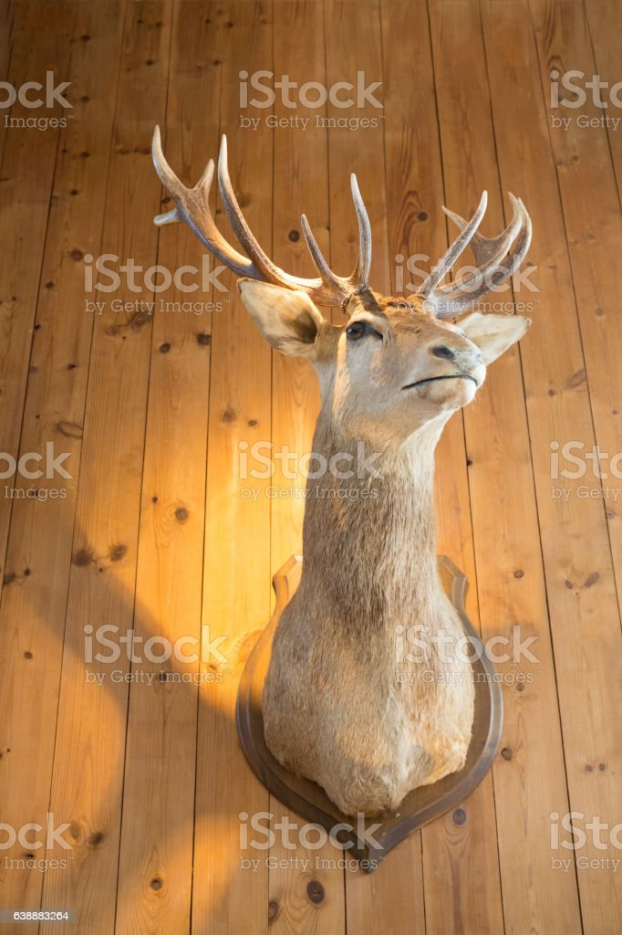 Deer horn antler stock photo