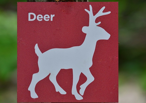 A hiking trail in the Smugglers' Notch along the Brewster River has really cute animal ID signs for children and urban dwellers to recognize the different wildlife when they spot it. Here is the deer sign