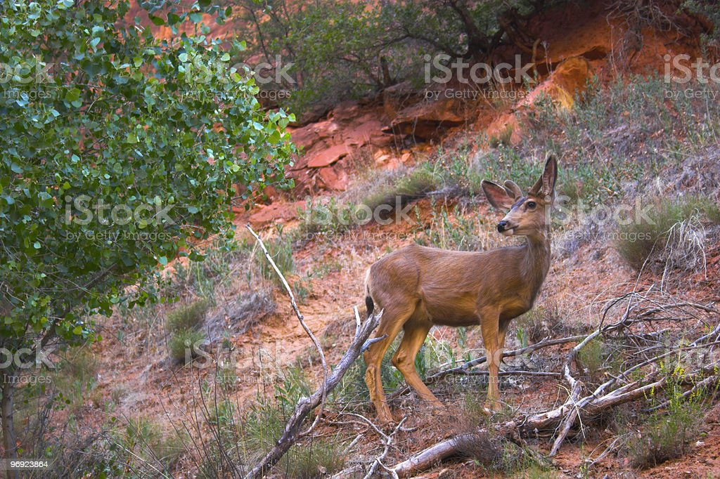Deer in a wild royalty-free stock photo