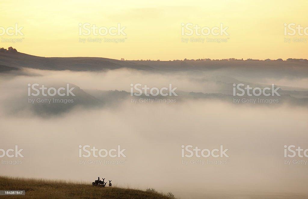 Deer in Fog stock photo