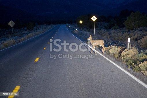 istock Deer in headlights 533993141