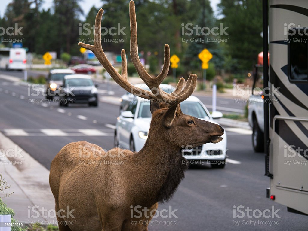 Deer in the City stock photo