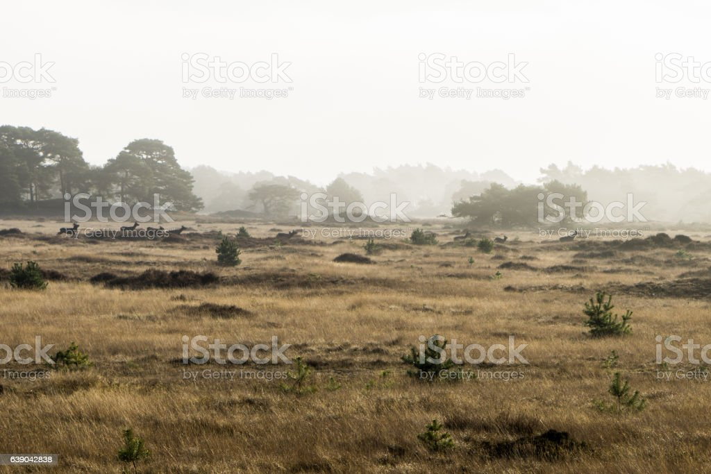 Hirsche in der Landschaft stock photo