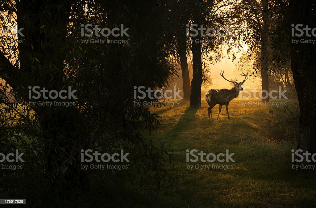 Deer in the forest. stock photo