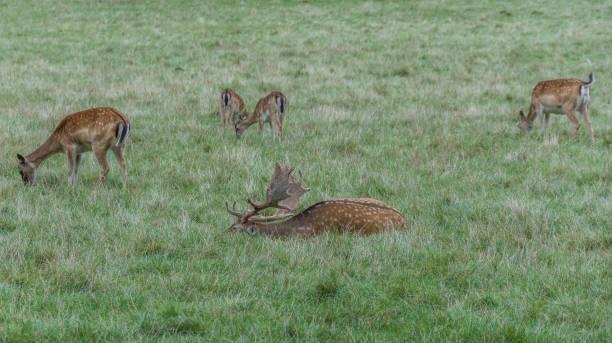 Deer in der meadow – Foto