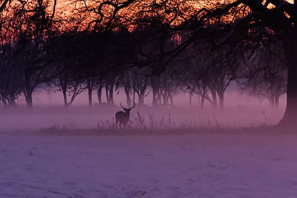 Hirsch in der Misty Phoenix Park – Foto