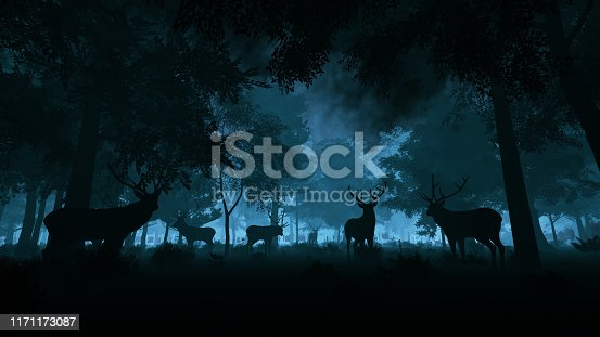 Deer in the night forest
