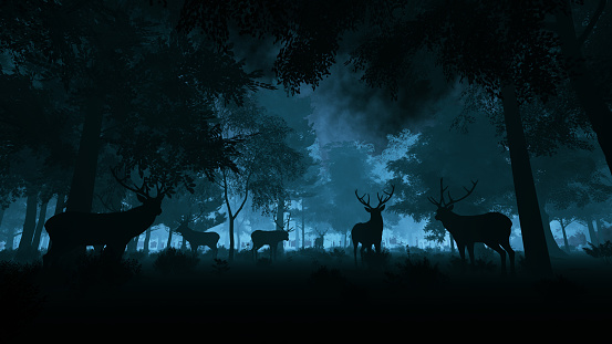 istock Deer in the night forest 1171173087