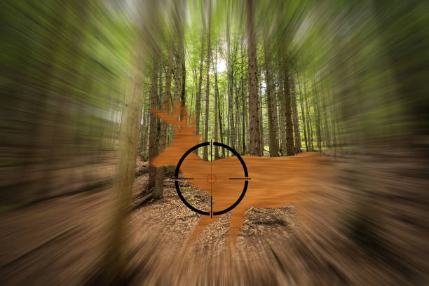 Deer in the Rifle Sight - Hunting in the woods Deer moving in the rifle viewfinder - Hunting in the woods concept poaching animal welfare stock pictures, royalty-free photos & images