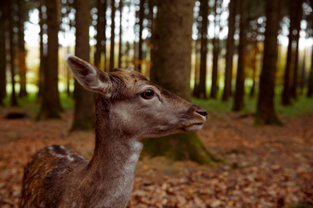 Reh im Wildpark stock photo