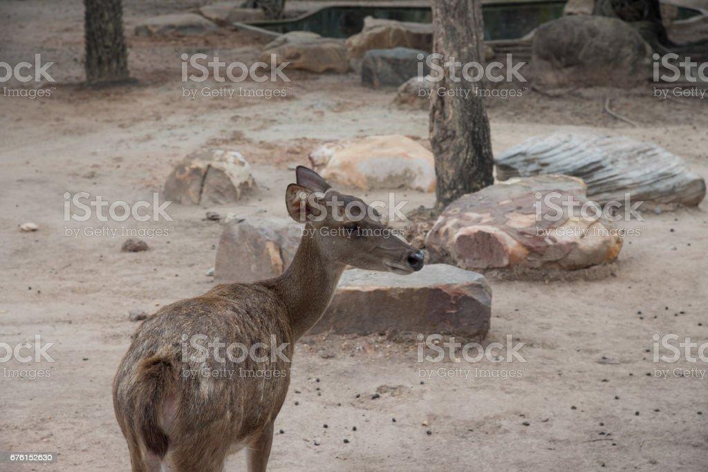 Deer in zoo stock photo