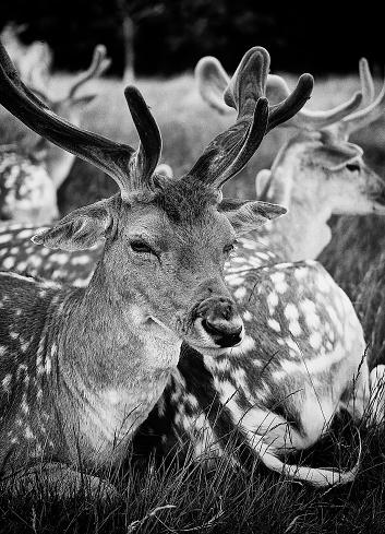 Deer In Zoo Stock Photo - Download Image Now