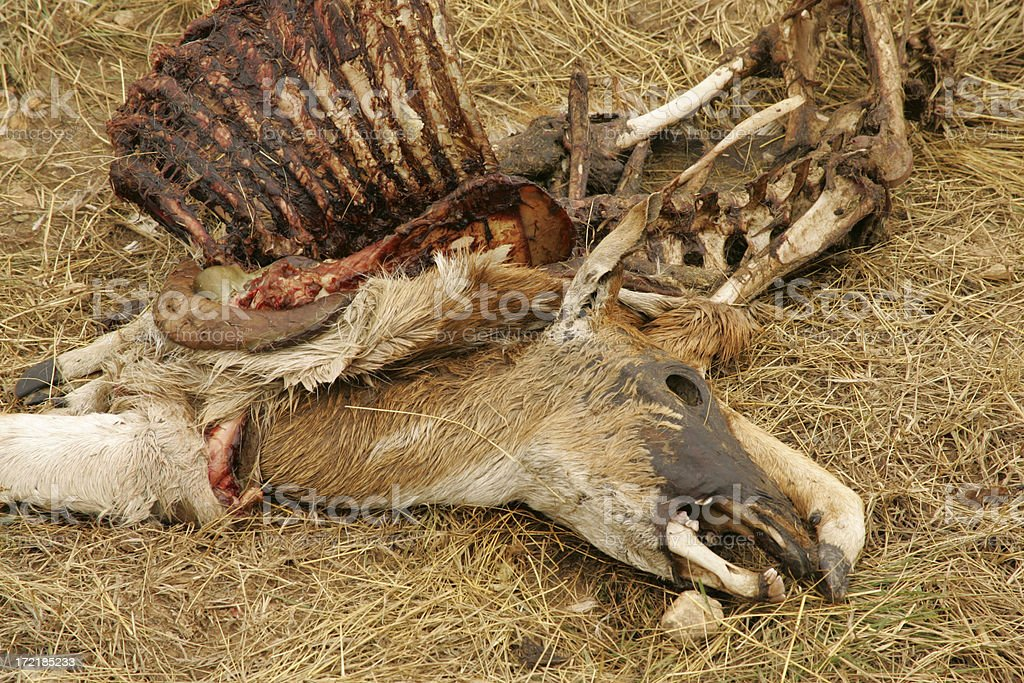 deer leftovers royalty-free stock photo
