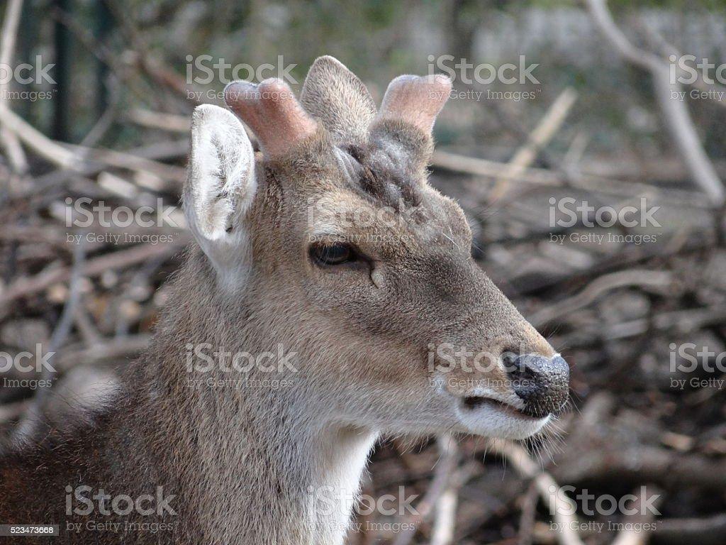 Deer looking away stock photo