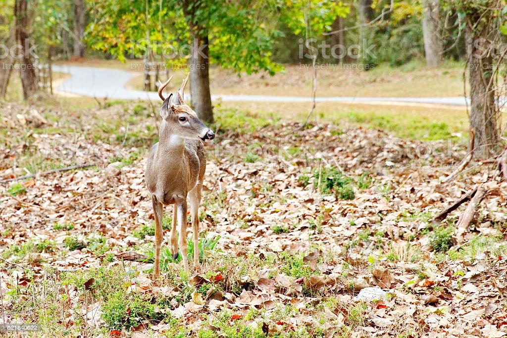 Deer me, are you in my space? stock photo