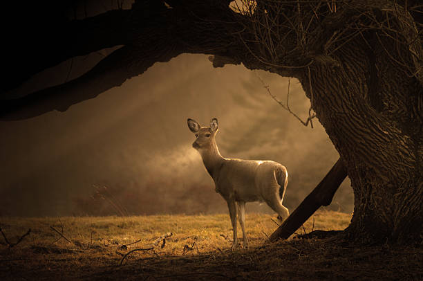 Deer on a cold winter morning stock photo