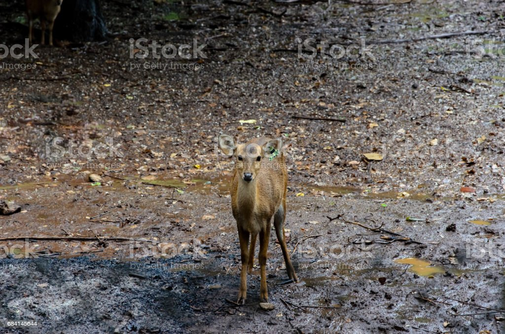 A deer on clay royalty free stockfoto
