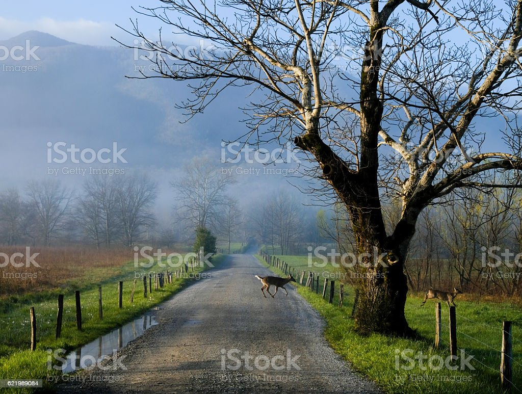 Deer on country road stock photo