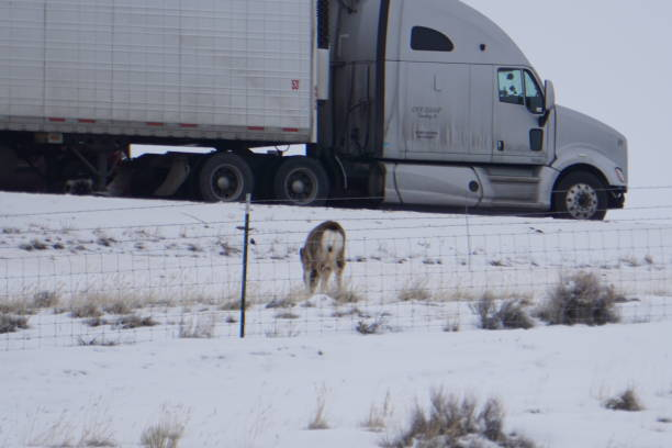 Deer On Roadside in broad daylight in Wyoming near the interstate stock photo