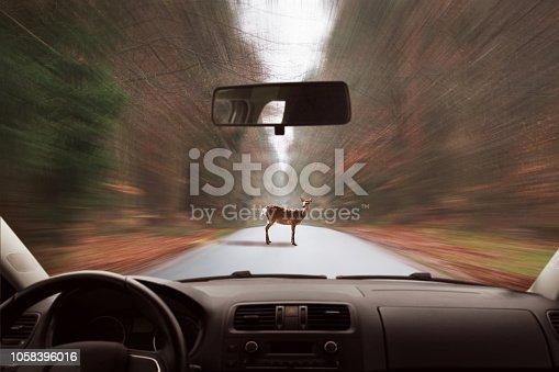 istock Deer on the road 1058396016