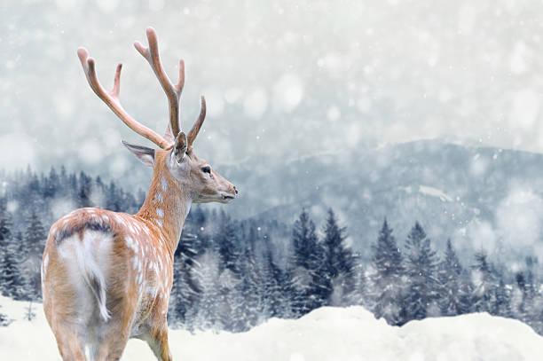 deer auf winter hintergrund - deko geweih stock-fotos und bilder
