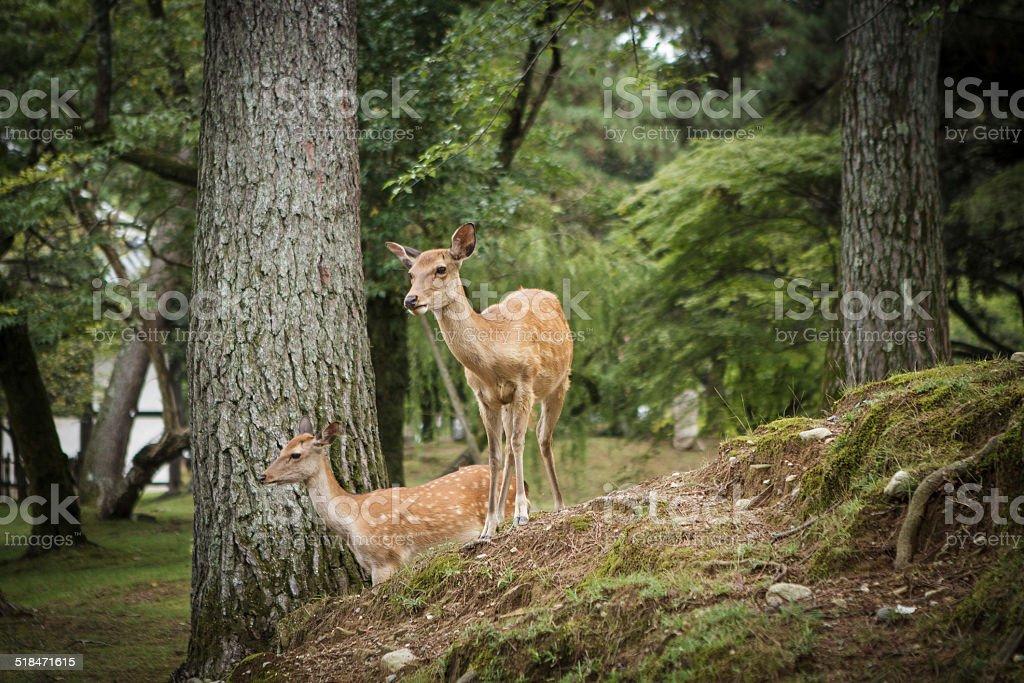 Deer - foto stock