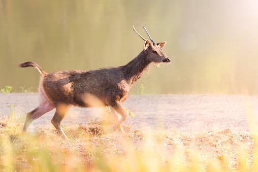 Deer Stock Photo - Download Image Now