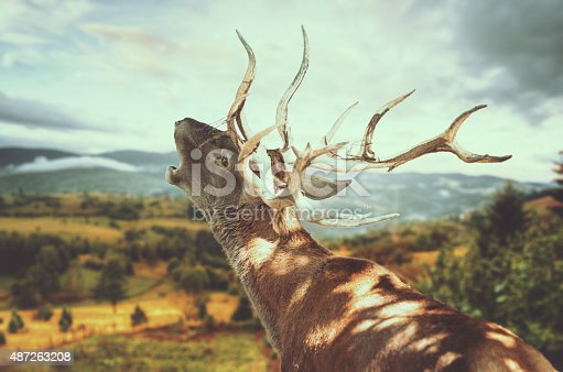 Close up of a deer roaring, with mountain landscape blurred in front of him.