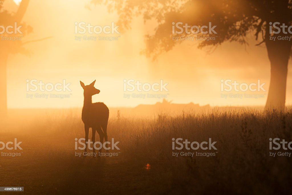 Deer Scenic stock photo